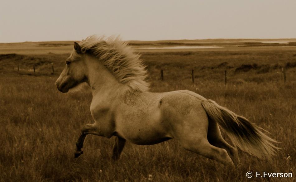 runninghorse.JPG