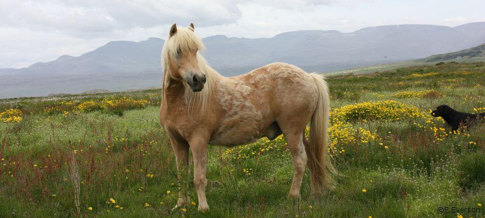 horsemeadow.jpg