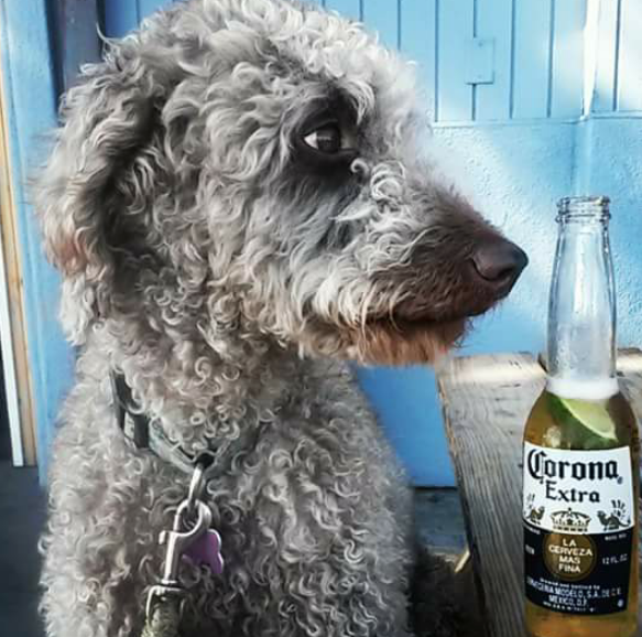 Cardiff Beach Bar at Tower 13 dog friendly.png