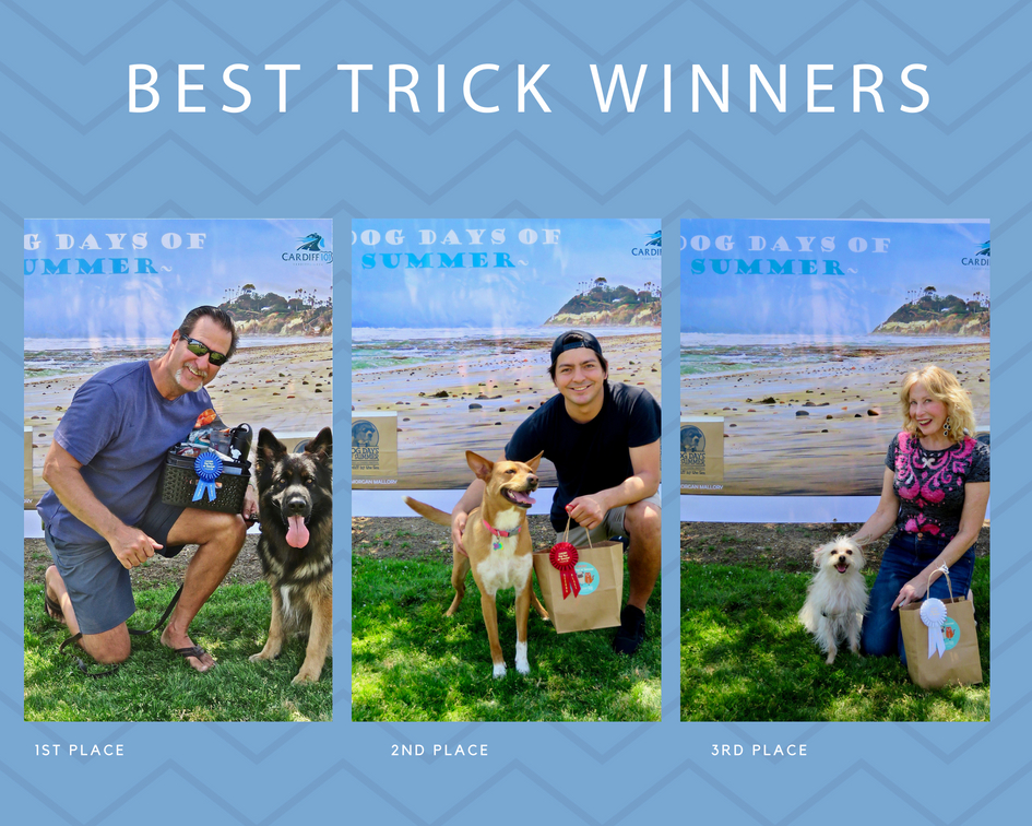 dog days of summer dog contest.jpg