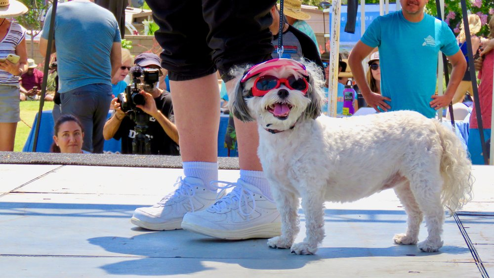 Contestants_Dogs__MM_0148.jpg
