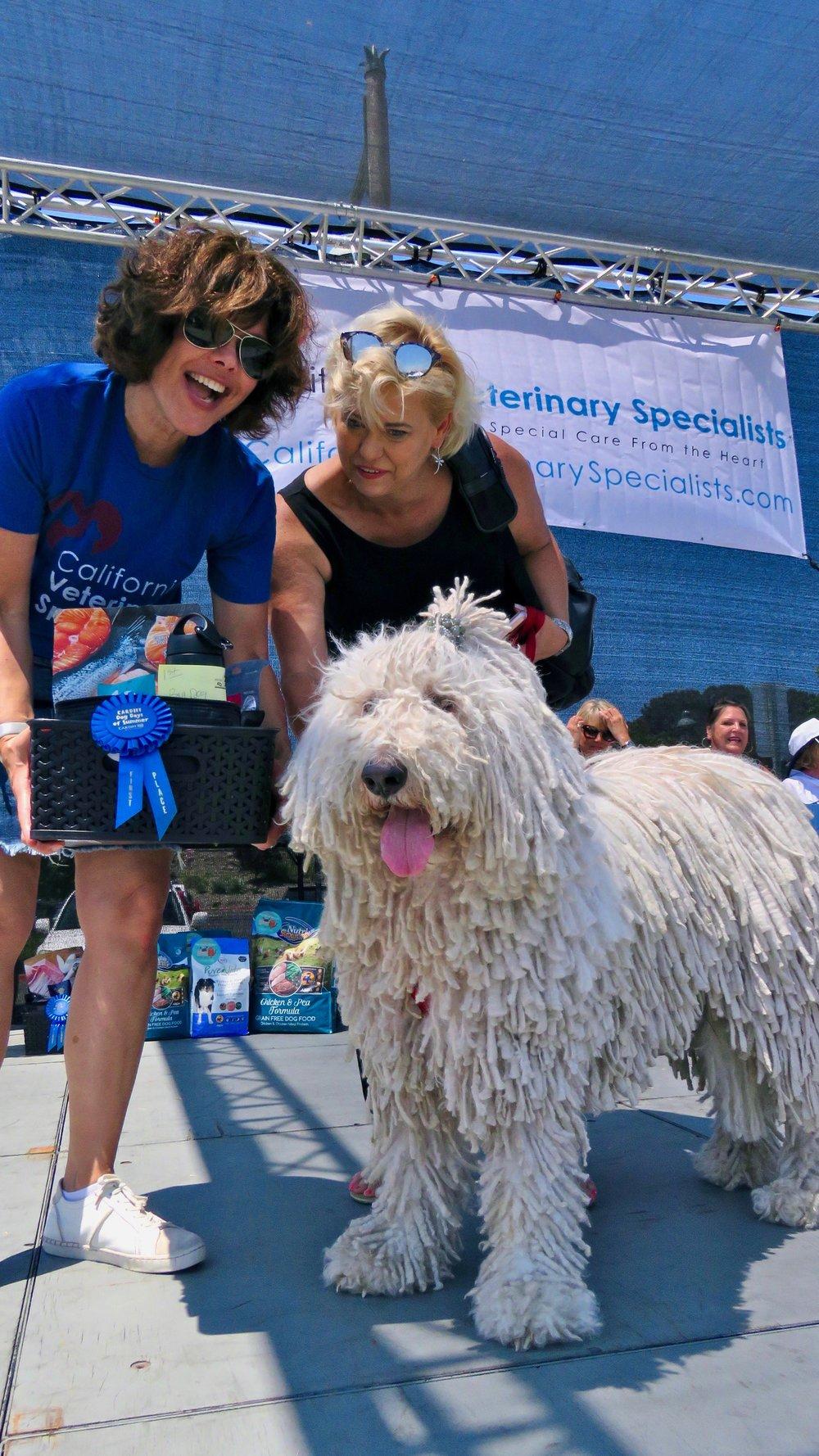 2018 Ultimate Dog Lover Sponsor CVA California Veterinary Specialists participating in popular dog contest