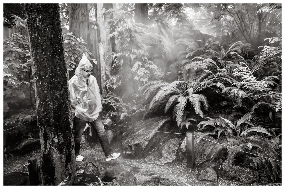 Rainforest  North Vancouver, BC 2013
