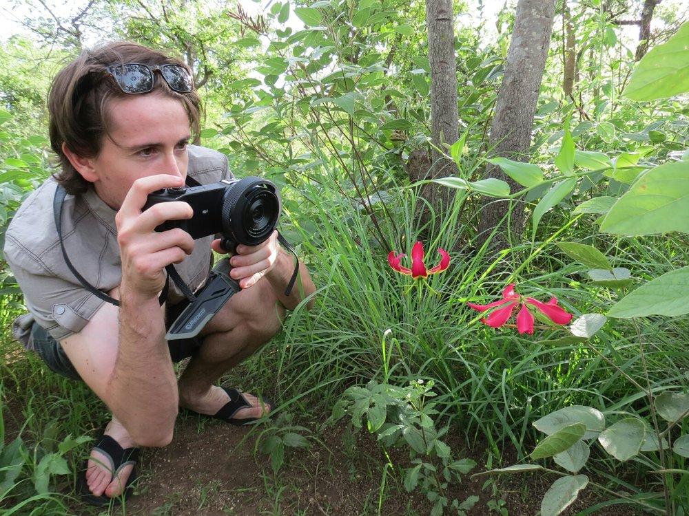 Killian enjoying a lovely Gloriosa.