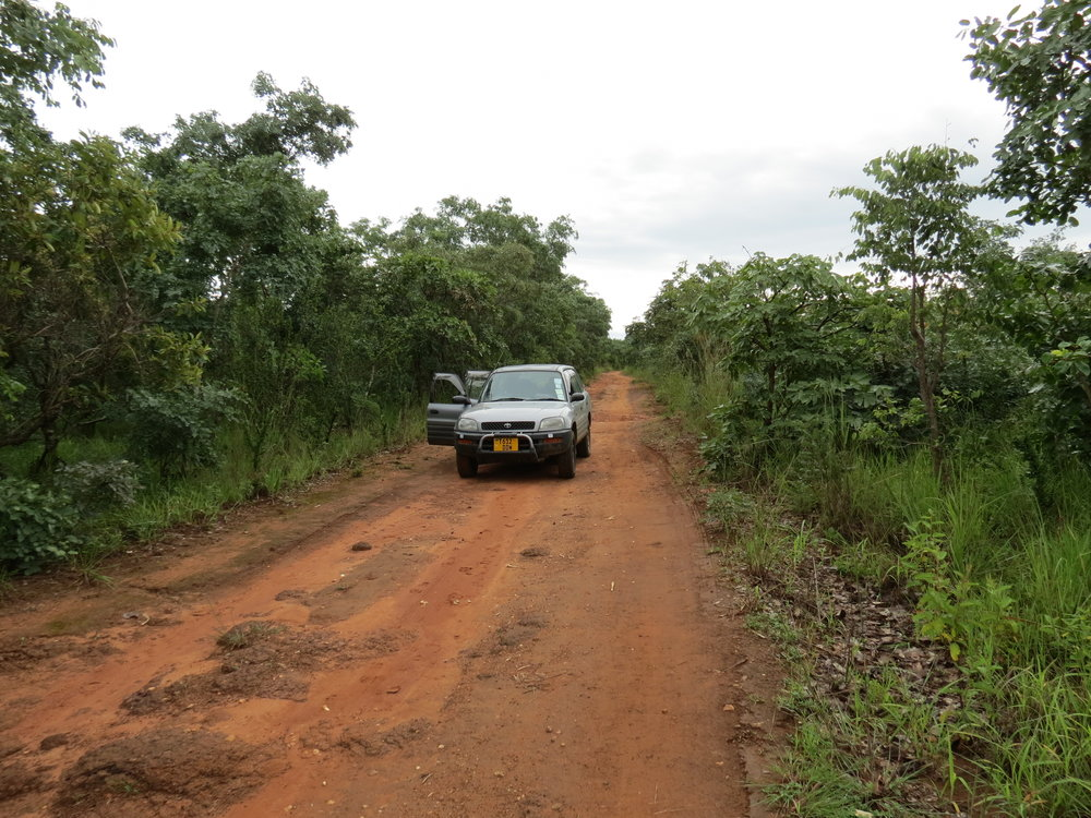 Road to Mutinondo Wilderness