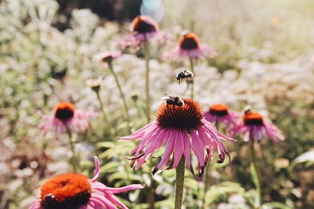 We have been working on a project involving these little guys. #protectthebees