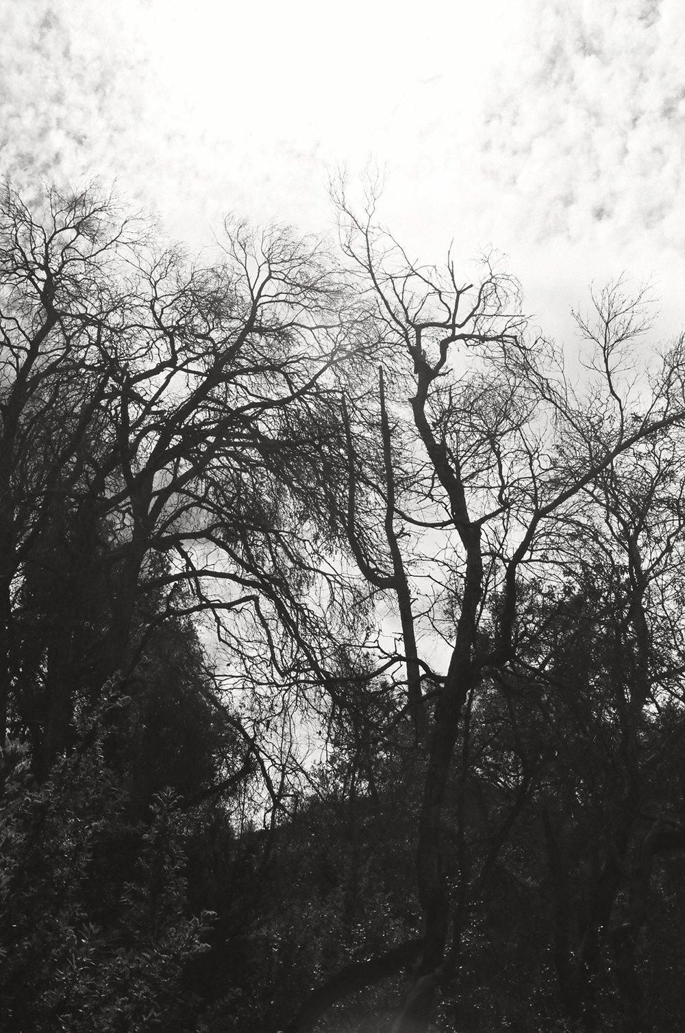 Motorhead Tree 2