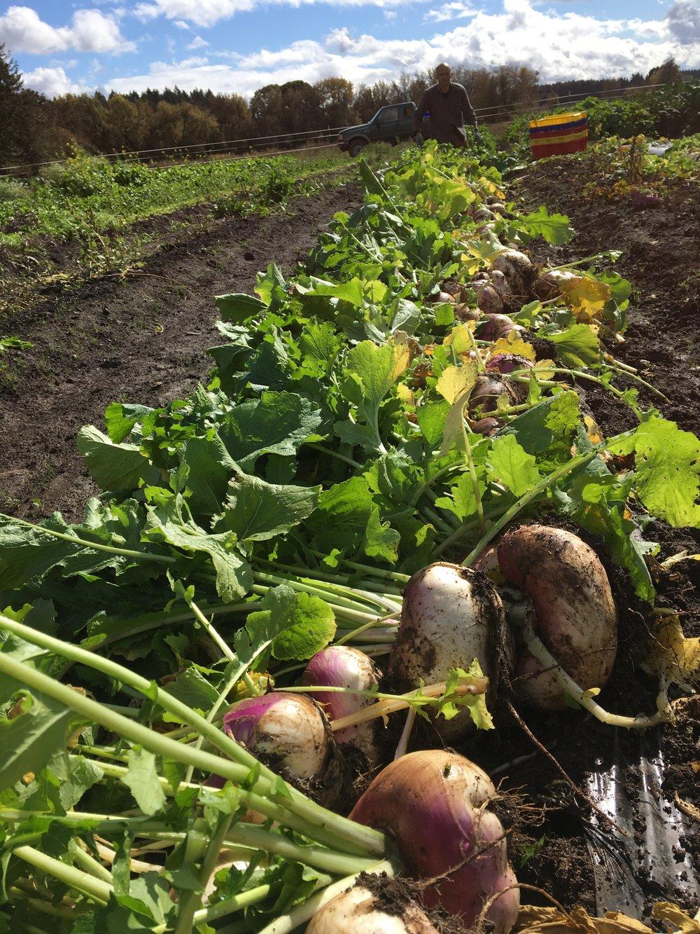 Super turnips. Scott got so many 1 ups.