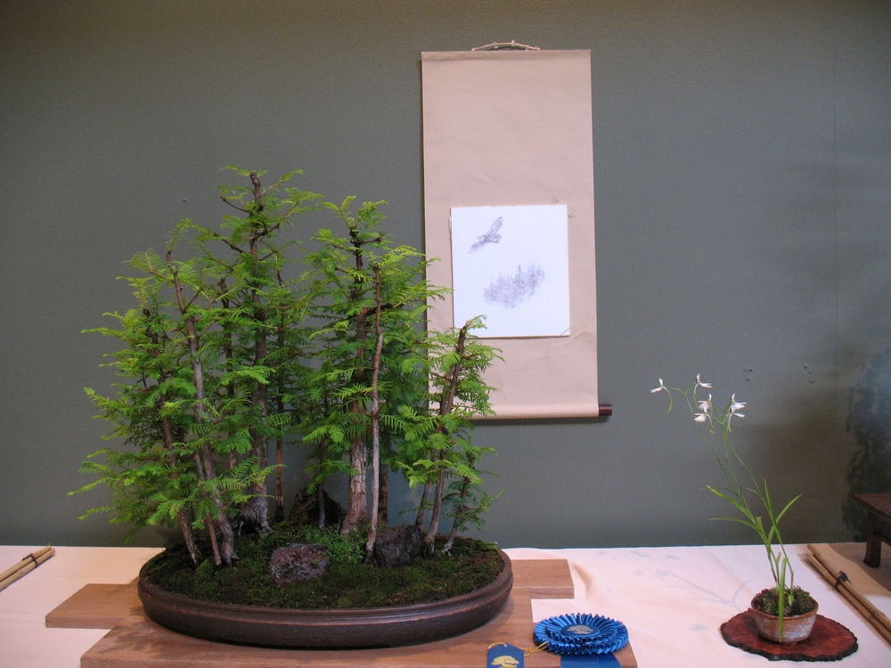 2015 Mid-America Exhibit - Dawn Redwood