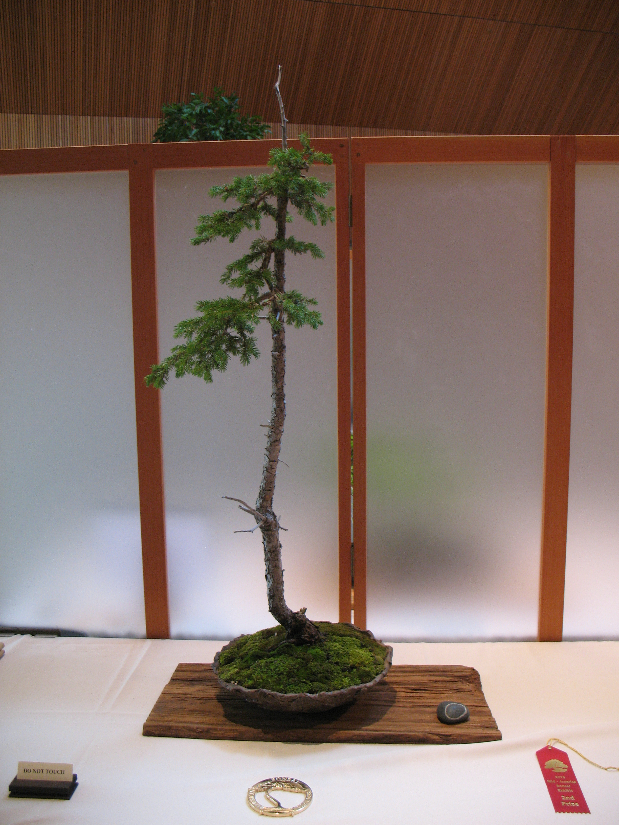 ExhibitGallery Midwest Bonsai Society - Black hills spruce bonsai trees