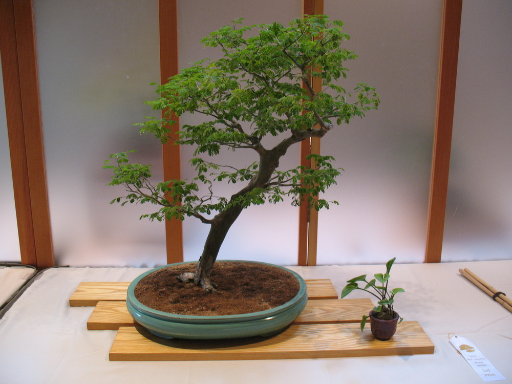 2015 Mid-America Exhibit - Open - Brazilian Raintree