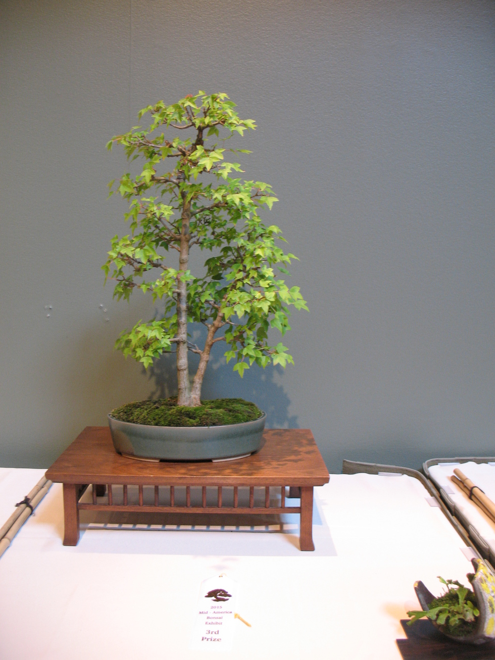 2015 Mid-America Exhibit - Open - Trident Maple