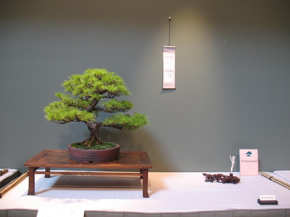 2015 Mid-America Exhibit - Professional - Banshosho Japanese Pine