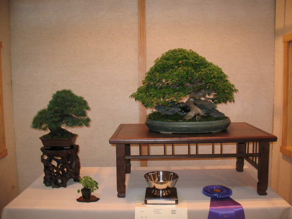 2015 Mid-America Exhibit - Professional - Trident Maple and Japanese White Pine