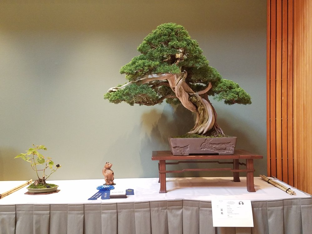 2017 Mid-America Bonsai Exhibition - Kishu Sargent Juniper - Informal Upright