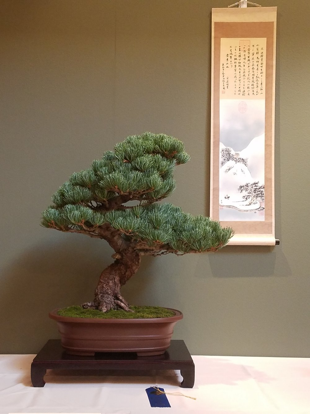 2017 Mid-America Bonsai Exhibition - Japanese White Pine - Informal Upright