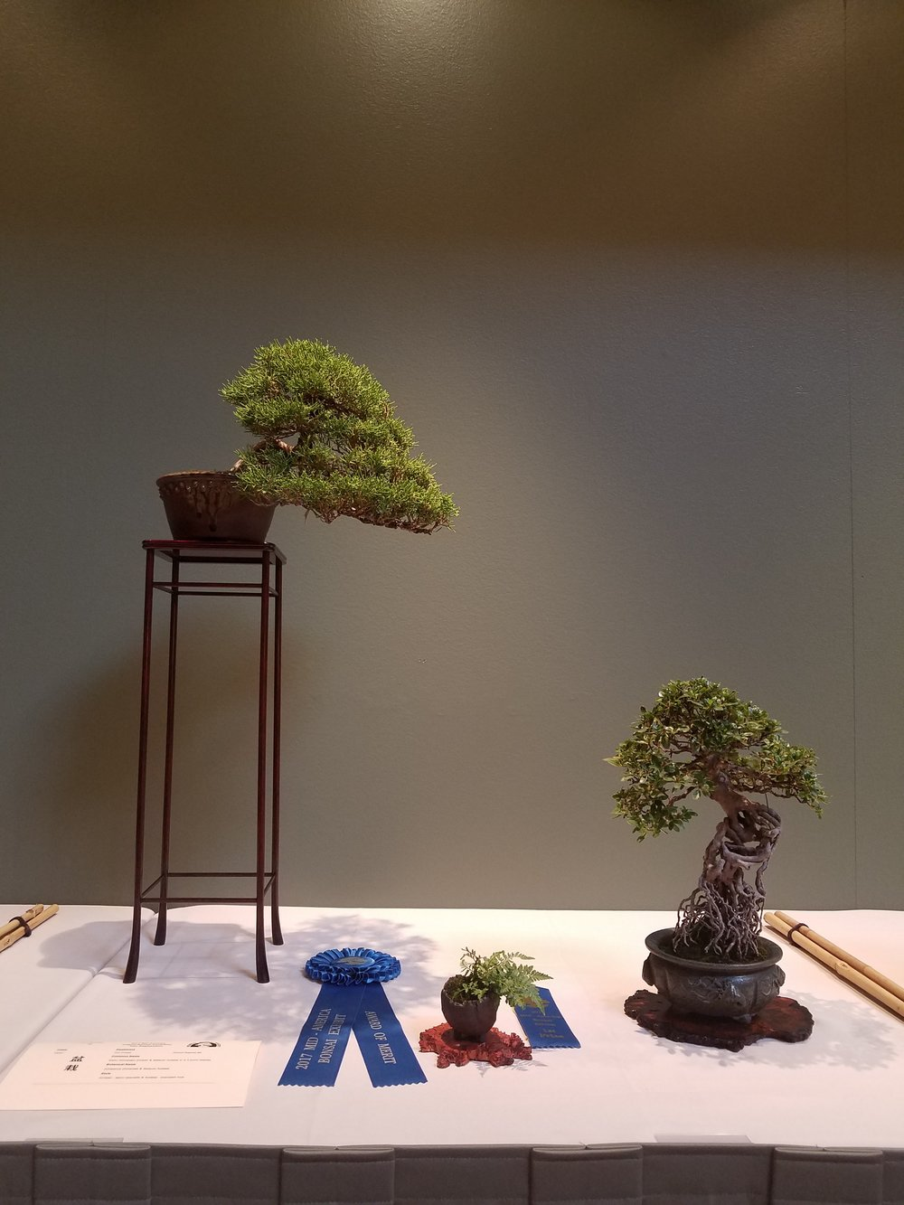2017 Mid-America Bonsai Exhibition - Kishu Japanese Juniper & Satsuki Azalea - Semi-Cascade & Exposed Root