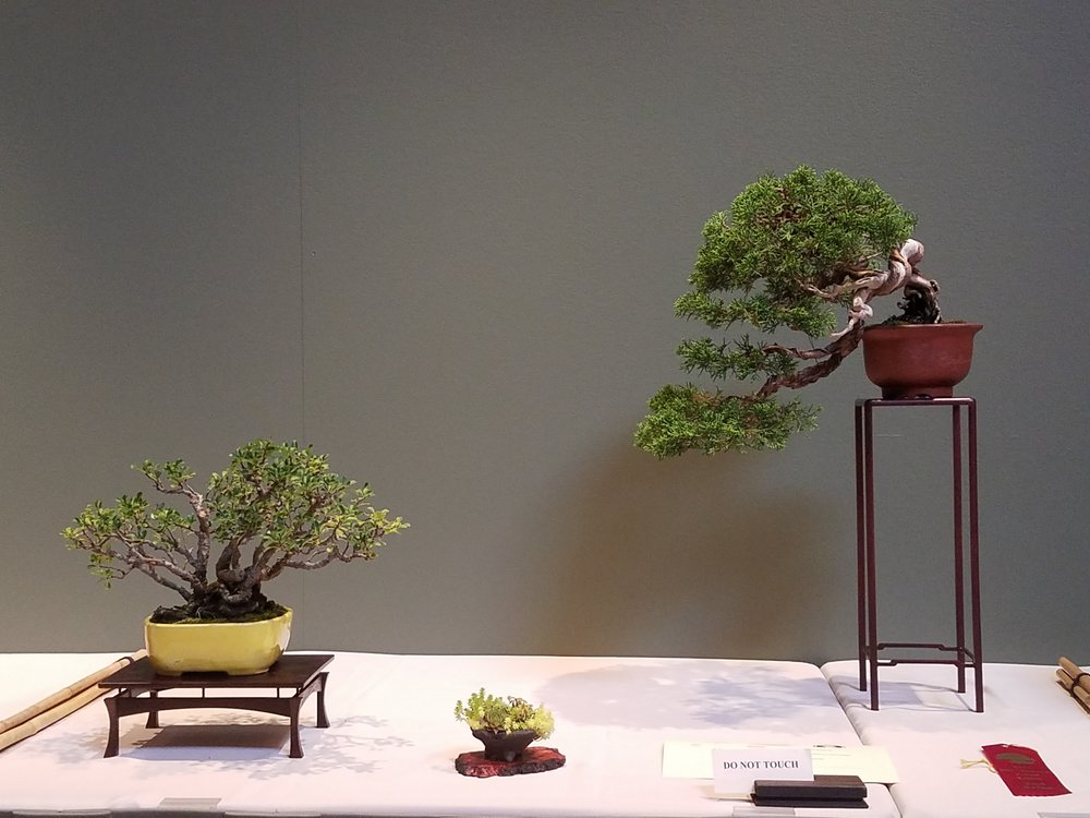 2017 Mid-America Bonsai Exhibition - Itoigawa Shimpaku Juniper & Chojubai Quince - Three Point Display