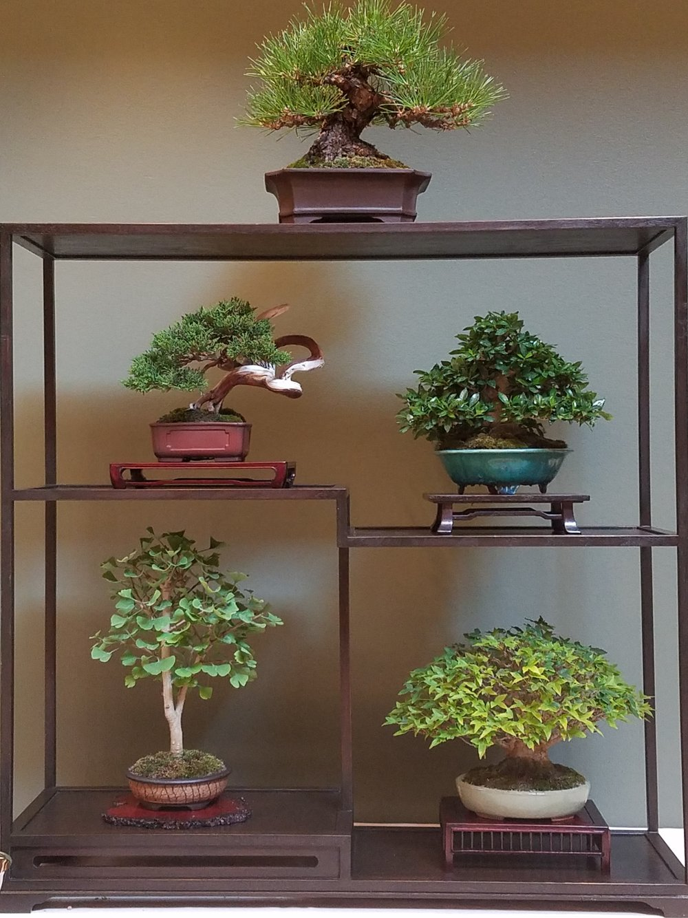 2017 Mid-America Bonsai Exhibition - Shohin Composition