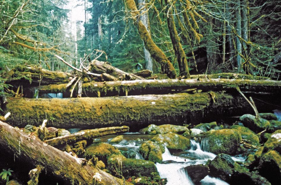 Mack Creek, H.J. Andrews. http://www.nature.com/ngeo/journal/v5/n2/fig_tab/ngeo1382_F1.html