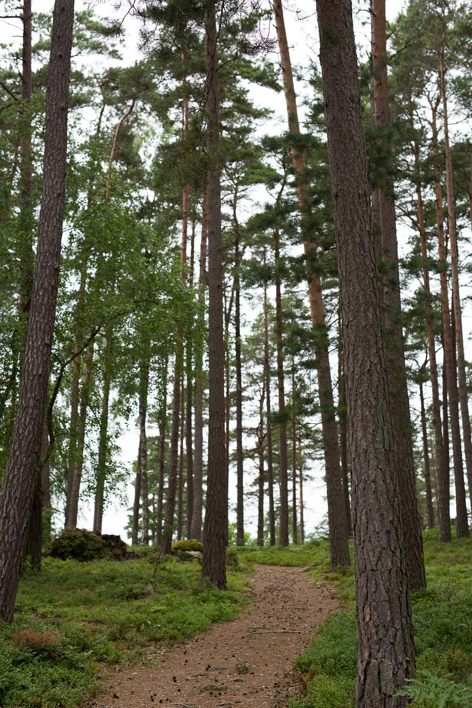Stillingson forest-2.jpg