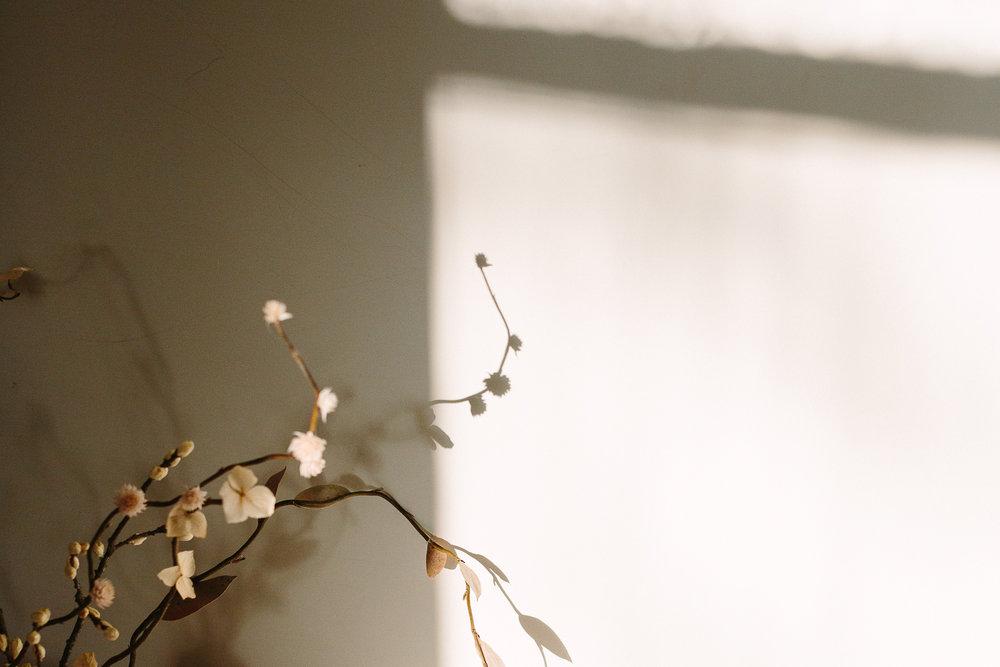 Shadow - markantonia