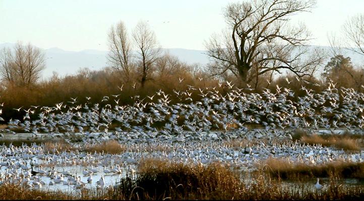 bird_flock_rising.jpg