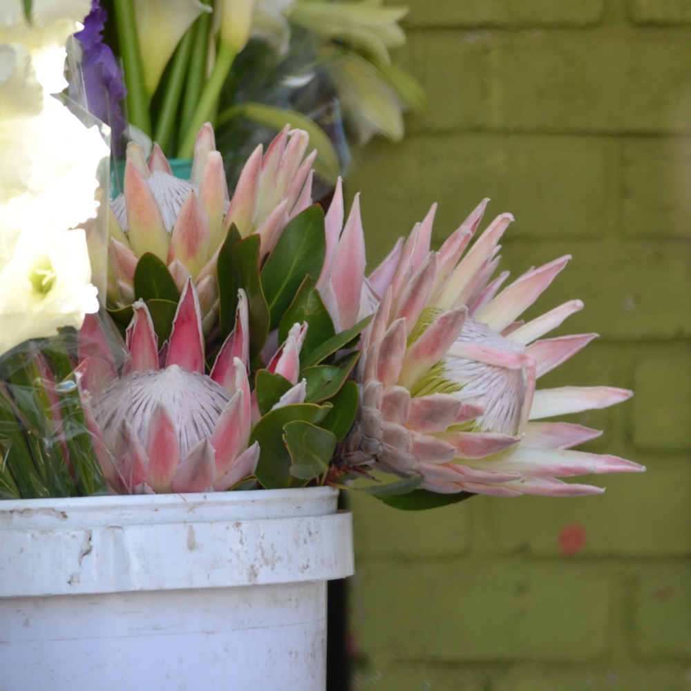 Cape Town proteas