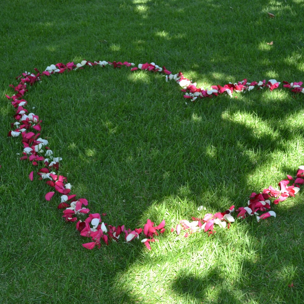 Heart petals for a proposal!