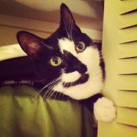 Doug Hoyer's cat, Joey Photo credit: Doug Hoyer