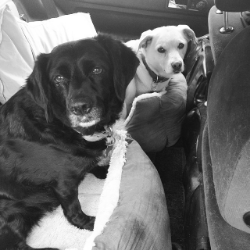 Nabby + Daisy in the car [Image: Amy van Keeken]