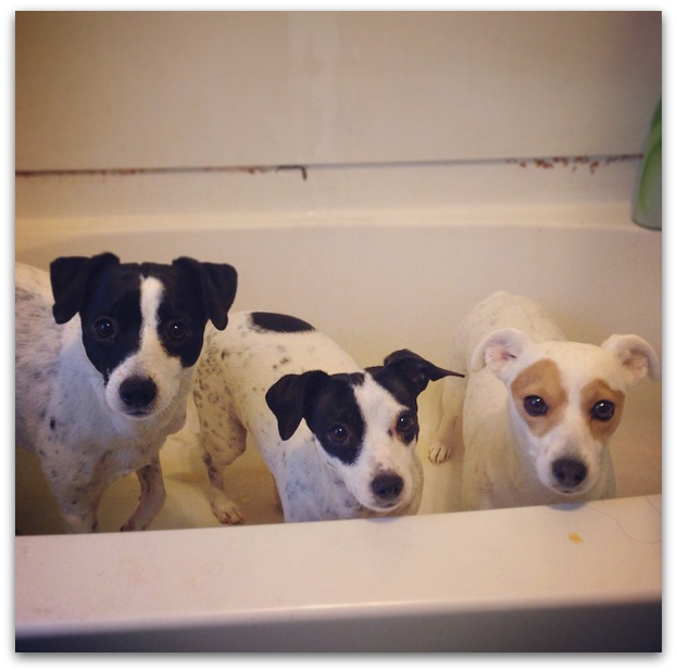 Punchy, Go Go & Tinkerbell Nanette's Instagram caption: Hi, we hate baths & have a dirty tub. Don't judge.