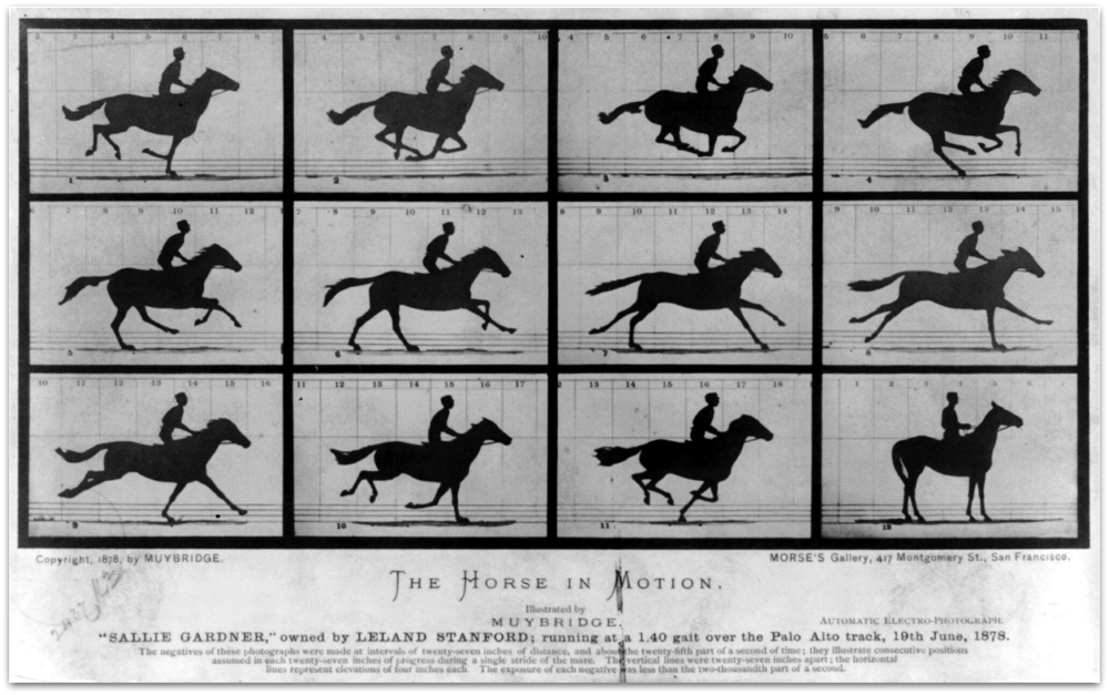 In 1872, the former governor of California, Leland Stanford, a businessman and race-horse owner, hired Eadweard Muybridge for some photographic studies of his horse (Image: Wikipedia)