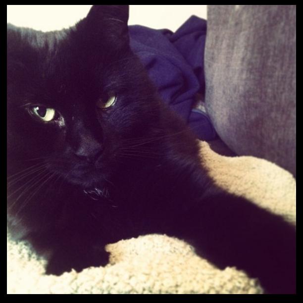 Solomon (Image: Holly)
