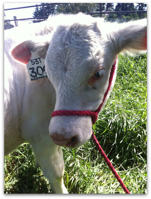 Bruno on the farm