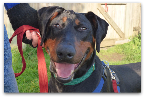 Bobby [Image from Battersea Dogs & Cats Home]