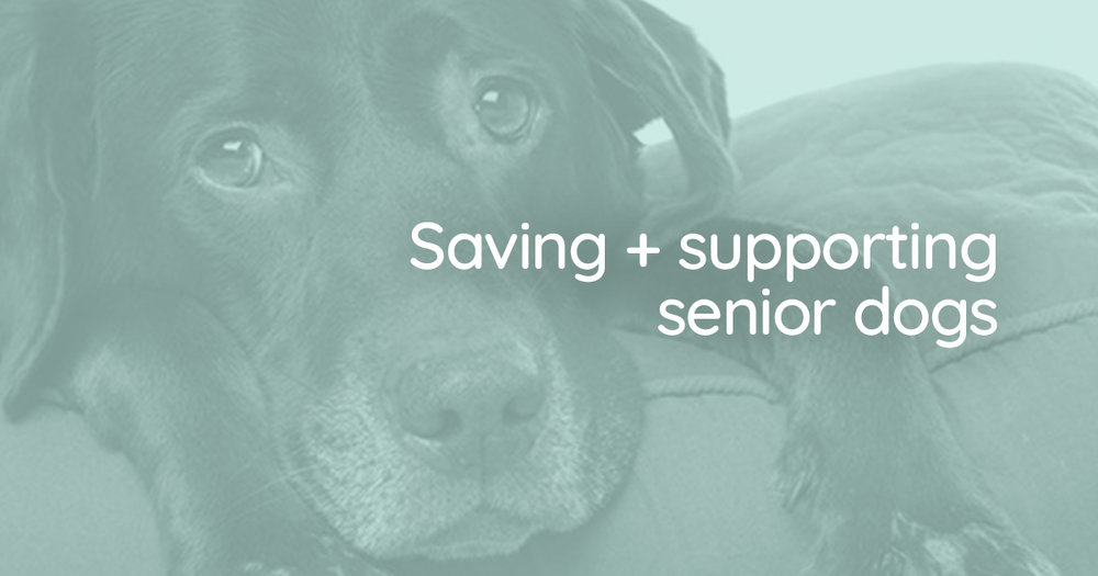 VALUING SENIOR DOGS > The Grey Muzzle Organization helps others help older dogs -