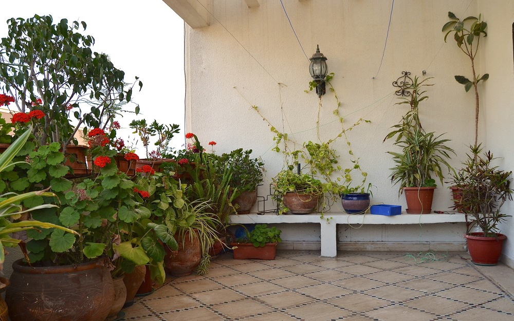 Omar's garden is an oasis in Rabat's warm summers.