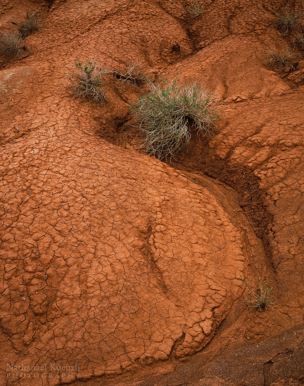 Cracked Dirt, Capitol Reef National Park, Utah, May 2005
