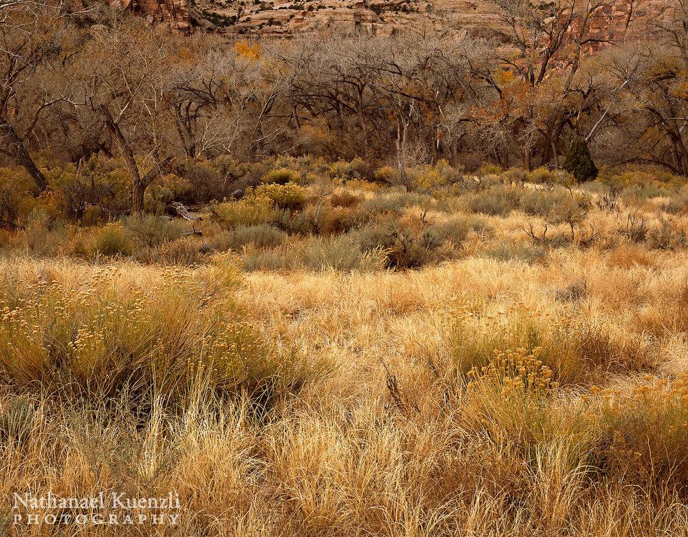 Indian Creek Corridor BLM, Utah, November 2010