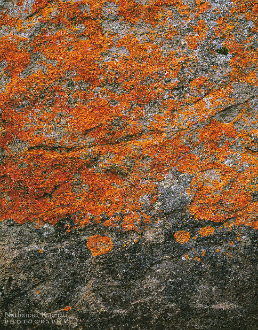 Lichen, Boundary Waters Canoe Area Wilderness, Minnesota, October 2005
