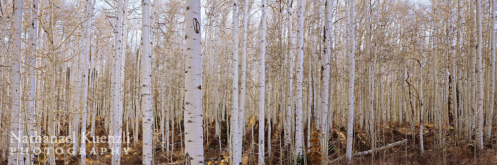 Aspen Panoramic, Manti-LaSal NF, Utah, November 2010