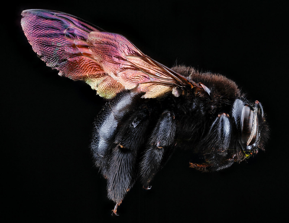 The Beautiful Bee.Macro photos of our earthly companions,enough said. © National Geographic