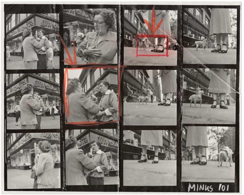 Hoja de contactos del fotógrafo Elliott Erwitt, titulada Chihuahua.Puedes comprar una copia en el sitio web de  Magnum.