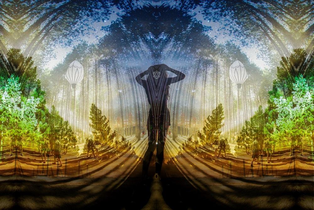 Forest2014treesplitgoddess-4.jpgsmaller.jpg