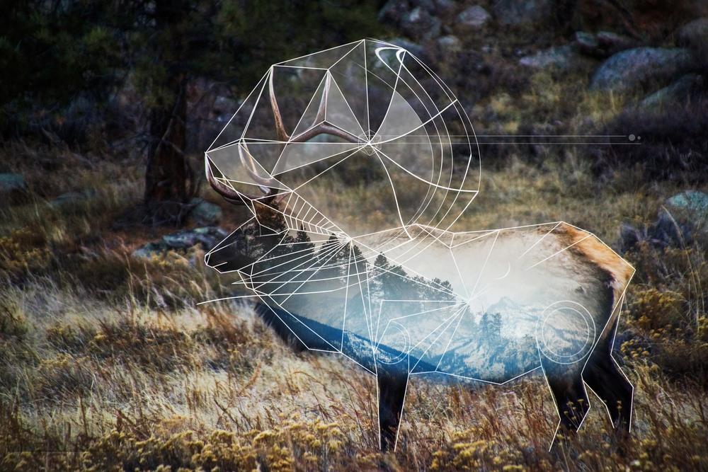 Reindeer- Estes Park, Colorado