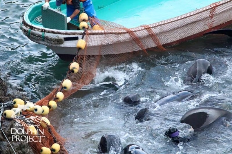 Image ©  dolphinproject.net