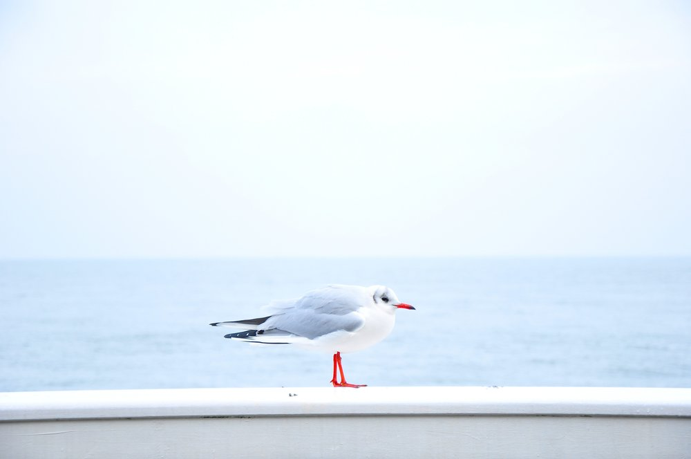 Photo by  davide ragusa on  Unsplash