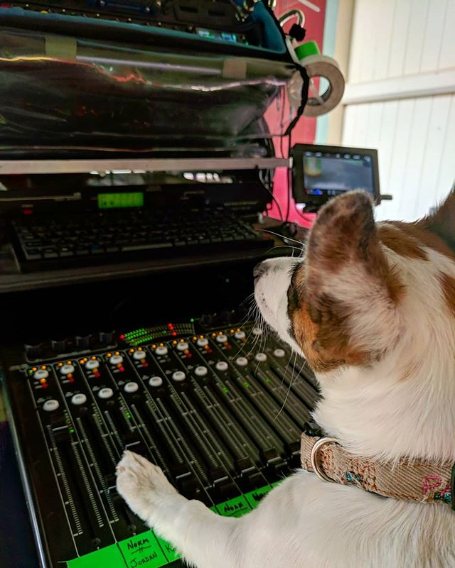 Patches the puppy sound mixer