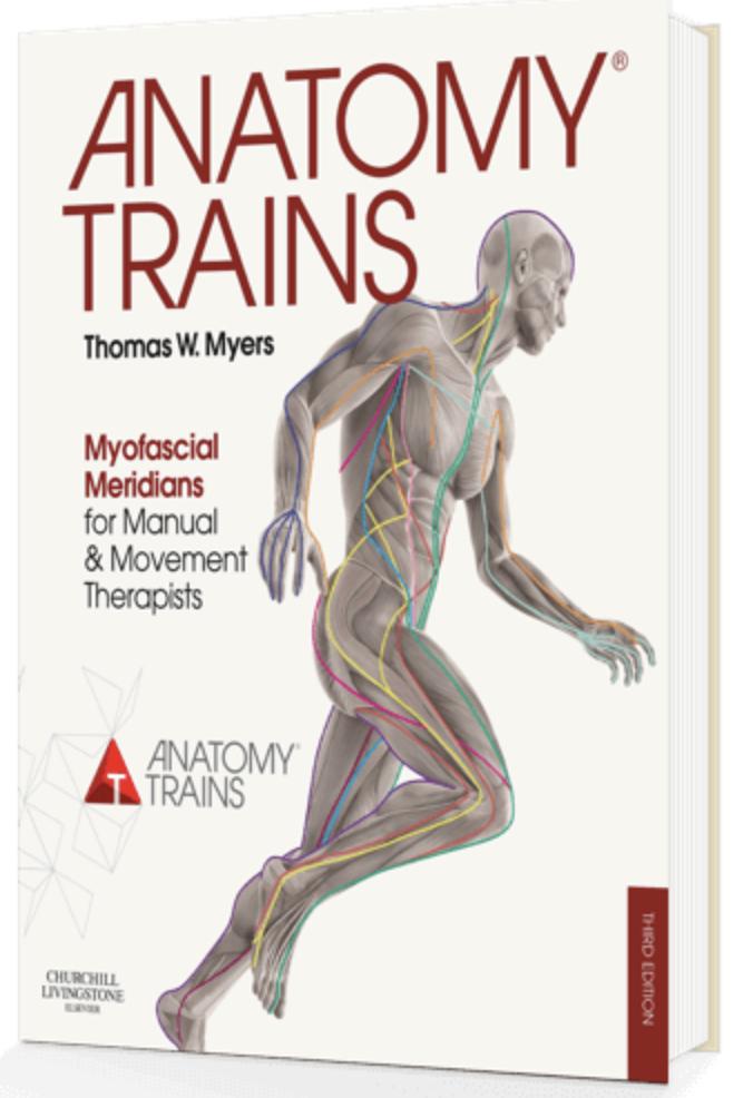 Anatomy Trains for Movement Professionals — Studio 26